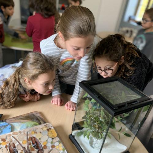 Éducation à l'environnement 6